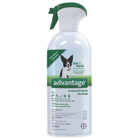 dog flea spray for house inspirational flea spray for furniture graphics home sweet home
