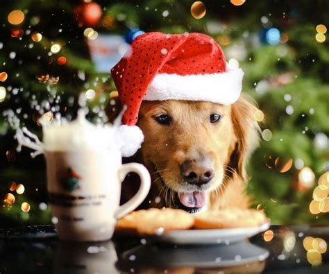 Christmas Wallpaper With Dogs | christmas dog wallpapers wallpaper cave