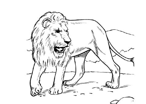coloring pages detroit lions detroit lions coloring pages coloring pages
