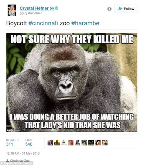 Funny Gorilla Meme - kaley cuoco and ricky gervais lead tributes to harambe the