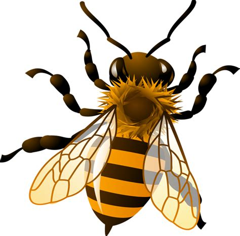 Free Honey Bee Clip by Honey Bee Clipart Clipground