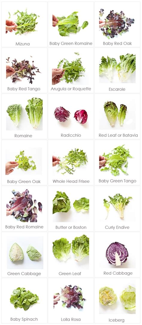 different type of leafy vegetable with name leafy greens for your edible garden in the garden with mariani landscape