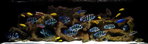 Cichlid Aquascape by An Aquascape For Frontosa Hardscape