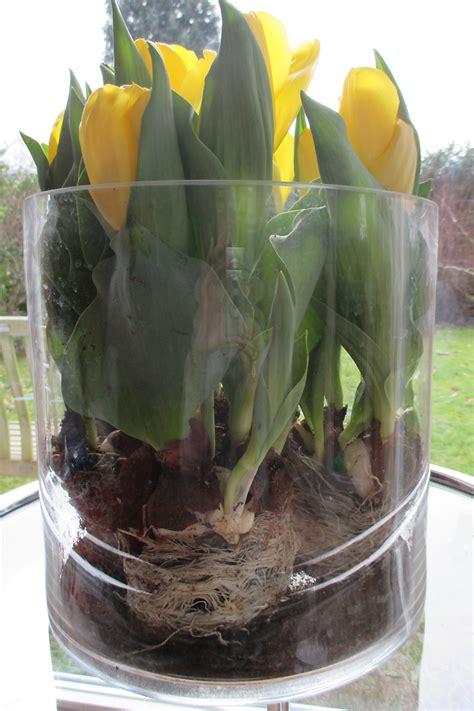 tulpen im glas blumen in glas blessfest galaxyquest info