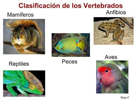 animales vertebrados mamiferos caracteristicas portal la chachipedia vertebrados