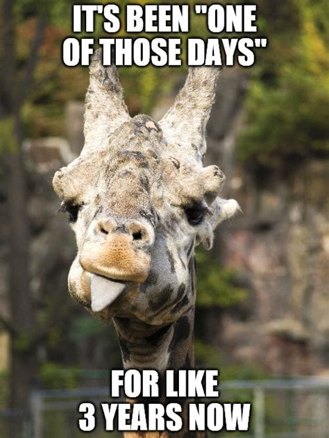 Funny Giraffe Memes - it s been one of those days imgflip