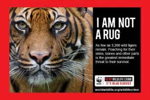 Circus Rug 9 Brilliant Ads That Fight Animal Cruelty Takepart