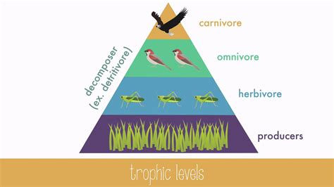 Energy Transfers 1 energy transfer in trophic levels