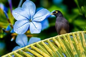 Mauritius fauna and flora indian ocean