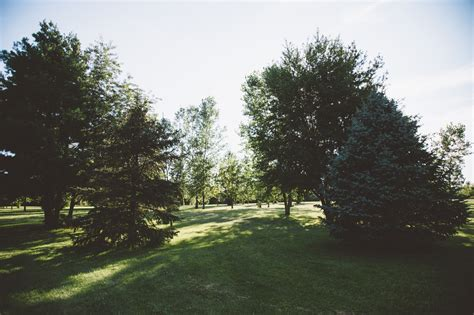 s backyard wedding columbus oh outdoor