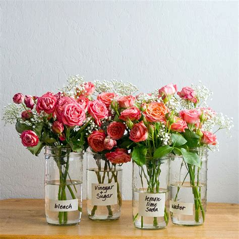 How Do Roses Last In A Vase how to make flowers last longer popsugar smart living