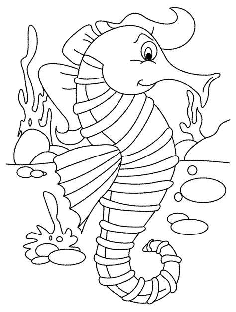 kumpulan gambar kuda laut untuk di warnai anak anak mewarnai gambar
