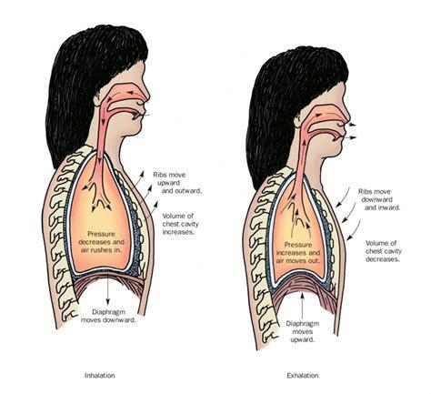 inhalation diagram 4 8 z image description guidelines for textbooks