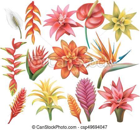immagini fiori tropicali fiori tropicali set tropicale bianco set fiori
