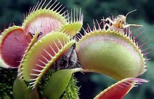 Apple Barn Menu Insectivorous Flowers Barnorama