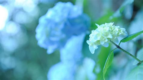 sfondi per desktop fiori natura fiori macro verde foto sfondi per desktop wallpaper