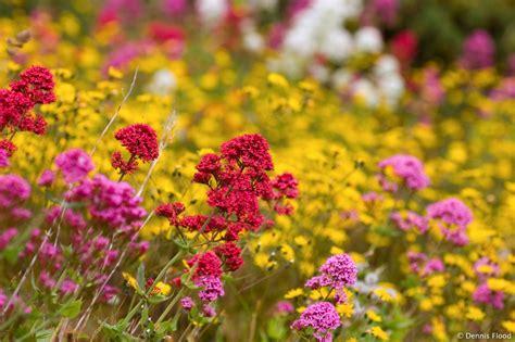 tipi di fiori tipi di fiori selvatici benessere leonardo it