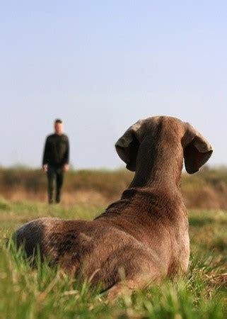 animal trainer illis abc