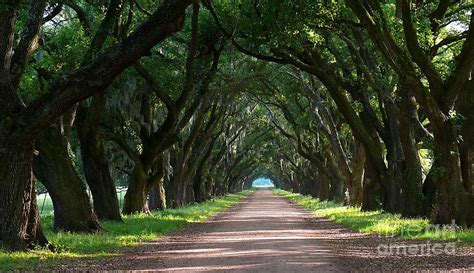 1000 images about tree covered pathways on pinterest