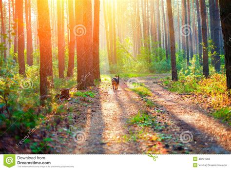 Forest Evening Mba Schedule by In The Forest Stock Photo Image 48231069