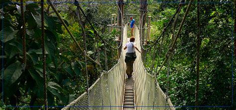 canopy amazon canopy amazon amazon nature tours paragon a captivating safari for an eco tourist media india group