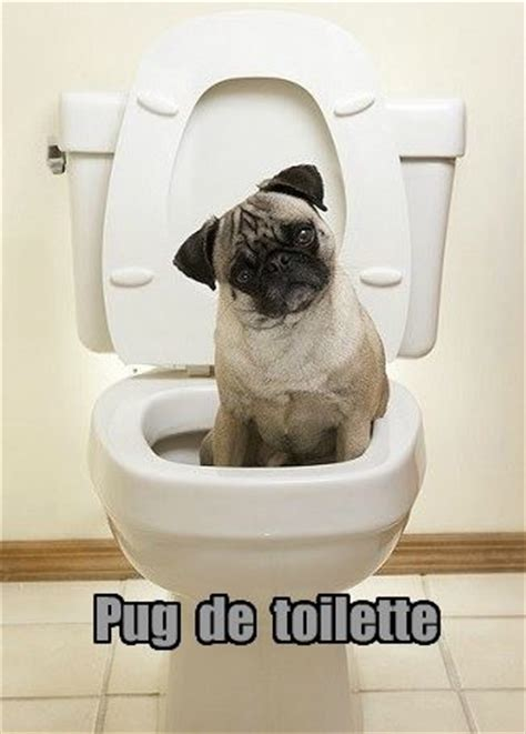 pug pun discover and save creative ideas