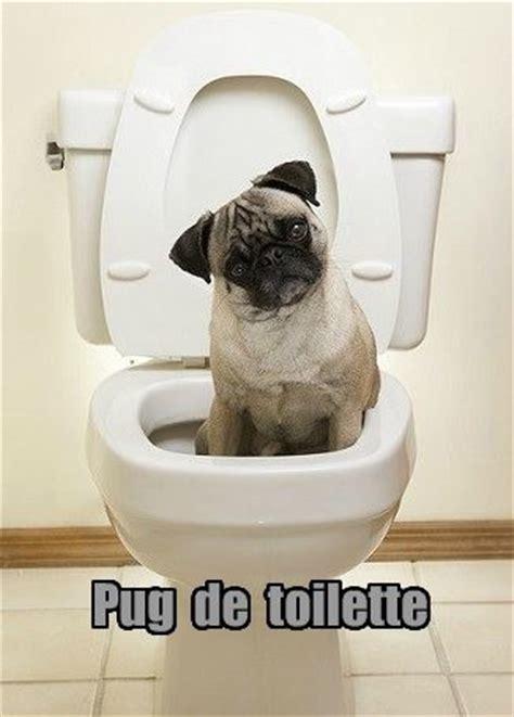 pug puns discover and save creative ideas