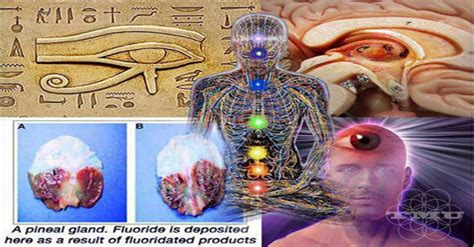 Detox Your Pineal Gland Decalcify In 1 Hour by How To Decalcify And Detoxify Your Pineal Gland