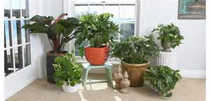 Easy Plants To Grow Indoors philodendron costa farms