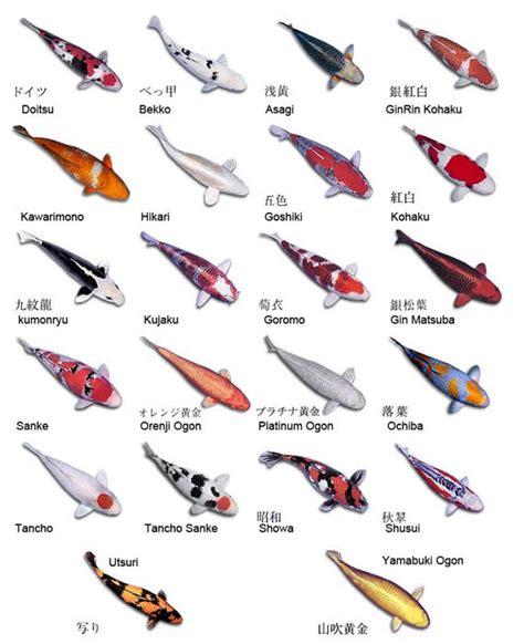 common carp tattoo designs koi fish tattoos what do they koi fish
