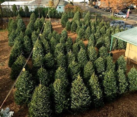 where to by articiful christmas trees staten island ny where to buy the best tree on staten island silive