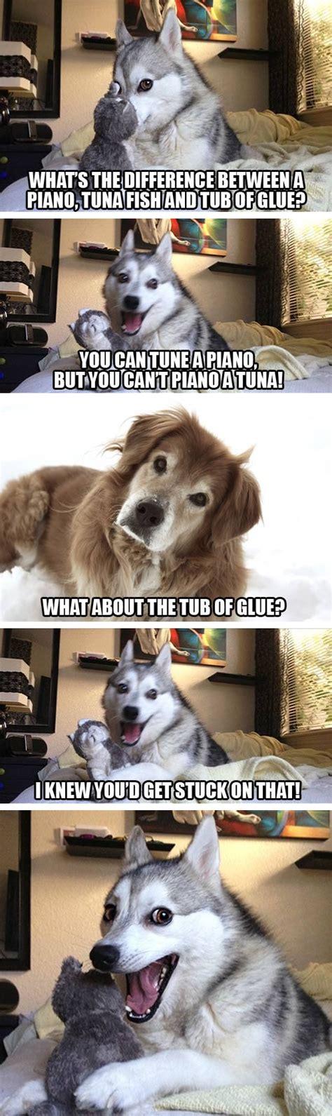 Bad Pun Raccoon Meme - the best worst jokes from pun husky craveonline