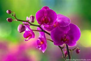 moth orchid phalaenopsis orchid moth orchid my house plants