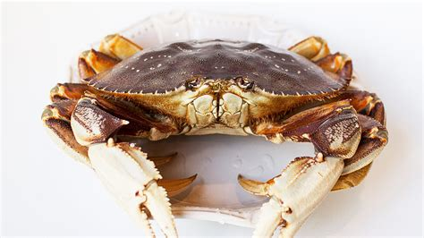Whats In Season Dungeness Crabs by California S Dungeness Crab Season Is Finally Way