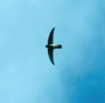 Myna Jumbo3 trip to mauritius 22 04 2001 04 05 2001