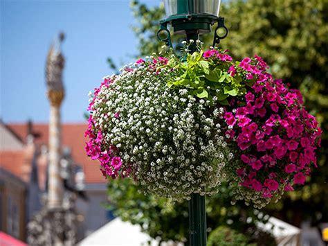 Garten Pflanzen Köln by Die Sch 246 Nsten Blumen Bildschoenheit Die Sch Nsten Blumen