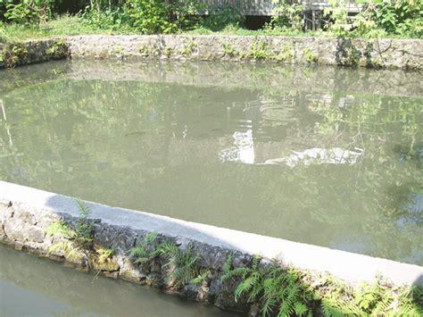 Bibit Ikan Nila Dan Gurame menerima pesanan bibit dan telur ikan gurame