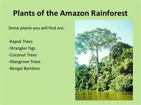 can you buy plants on amazon rainforests