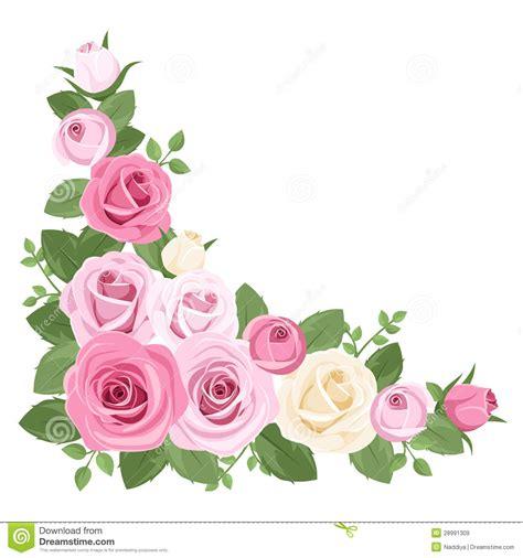 imagenes de rosas blancas y rosadas rosas rosadas y blancas capullos de rosa y hojas