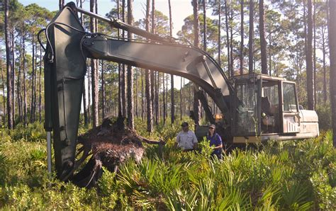 Landscape Timbers Tallahassee New Year And Tree Rings Tallahassee Community Blogs