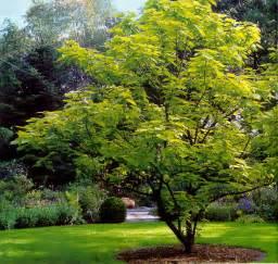 лиственные деревья удмуртии фото