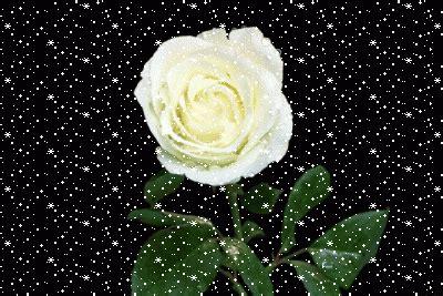 imagenes de rosas blancas hermosas con movimiento im 225 genes de rosas blancas con movimiento para fondos