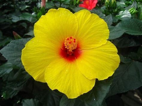 piante da fiore da appartamento piante da fiore piante appartamento piante da fiore