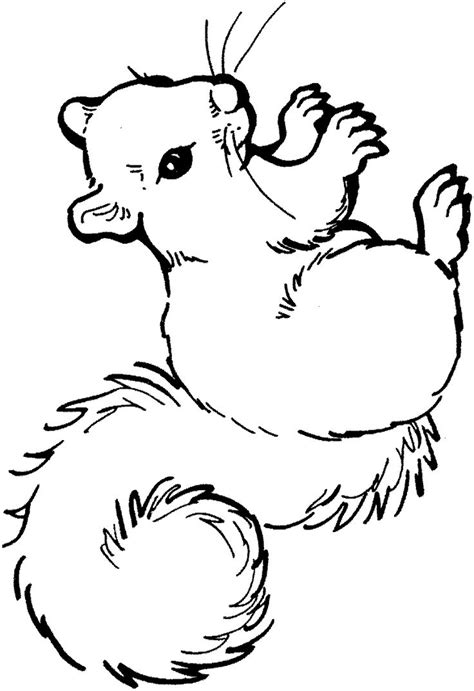 coloring page of squirrel squirrel coloring page clipart panda free clipart images