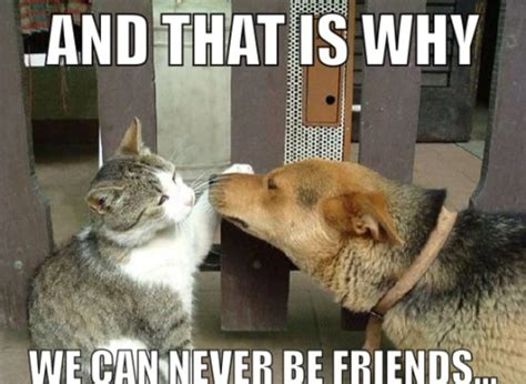 Funny Cat And Dog Memes - dog memes on tumblr