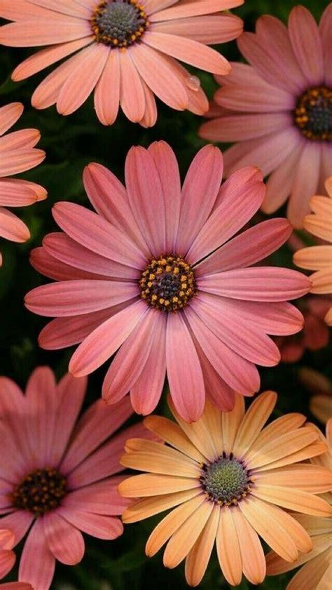 Gerbera Garten Pflanzen by Gerbera Sch 246 246 246 246 N Fotografie Blumen Blumen
