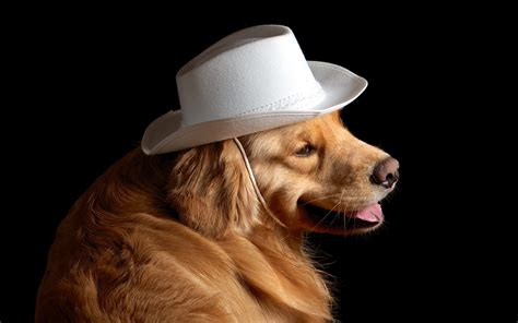 puppies in hats dogs in hats photos boomsbeat