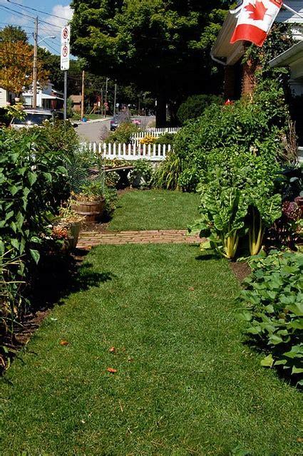 vegetable garden in front yard front yard vegetable garden update august the of
