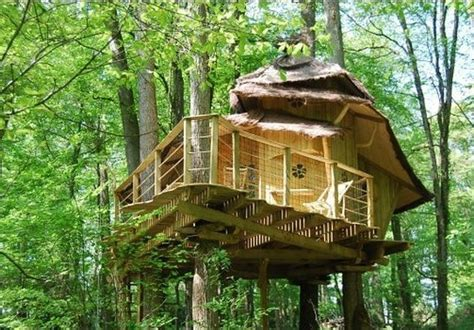 Tree Houses To Live In I Want To Live In A Treehouse Tree House