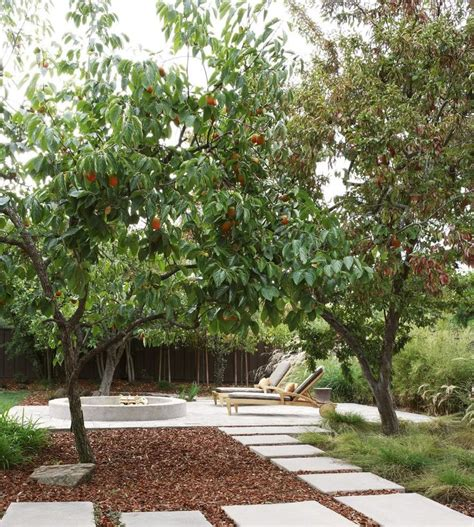 patio orange tree best 25 midcentury outdoor chaise lounges ideas on
